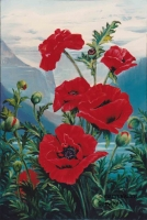 Poppy Homage to Lake Louise, F329, 36x24